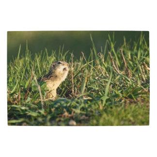 Thirteen-lined Ground Squirrel Eating Metal Print