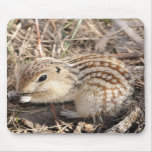 Thirteen Lined Ground squirrel Mouse Mat