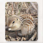 Thirteen Lined Ground squirrel Mouse Pad