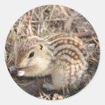 Thirteen Lined Ground squirrel Sticker