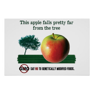 This apple falls pretty far from the tree. NO GMO Poster