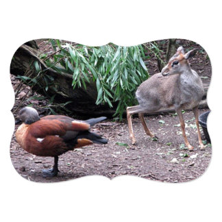 This Cape Shelduck Almost As Big As A Small Deer 5x7 Paper Invitation Card