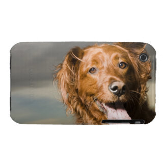 This dog is part golden retriever. iPhone 3 Case-Mate case