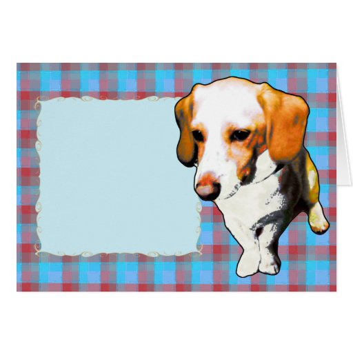 """this dog typical longevity of Beagles named """"cooki Cards"""
