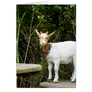 """""""This Goat is Well Composed"""" Card"""