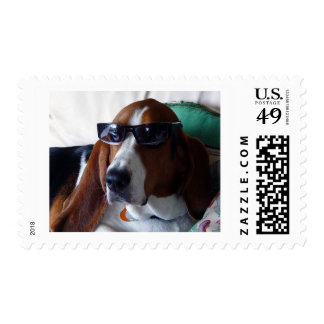 This hound dog is one kool kat postage