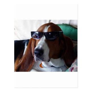 This hound dog is one kool kat postcard