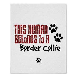 This Human Belongs to a Border Collie Poster