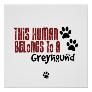 This Human Belongs to a Greyhound Poster
