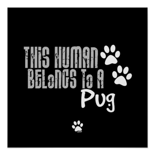 This Human Belongs to a Pug Poster