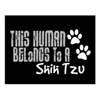 This Human Belongs to a Shih Tzu Postcard