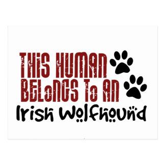 This Human Belongs to an Irish Wolfhound Post Card