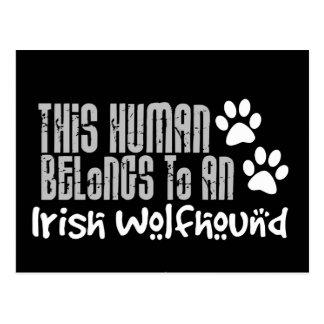 This Human Belongs to an Irish Wolfhound Postcards
