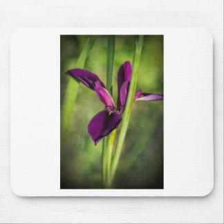 This is a Louisiana Gamecock Wildflower - Iris hex Mouse Pad