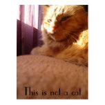 This is not to cat 001 postcard