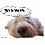 """This is the life Goldendoodle dreaming Cutout<br><div class=""""desc"""">This is the life. Dreaming away being all doodly. Goldendoodle sleeping dreaming of the good life.</div>"""