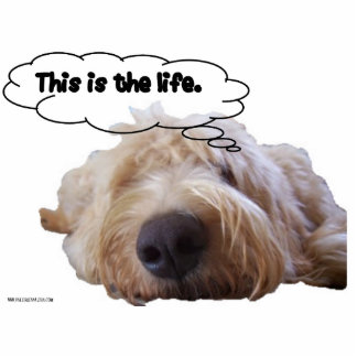 This is the life Goldendoodle dreaming Cutout