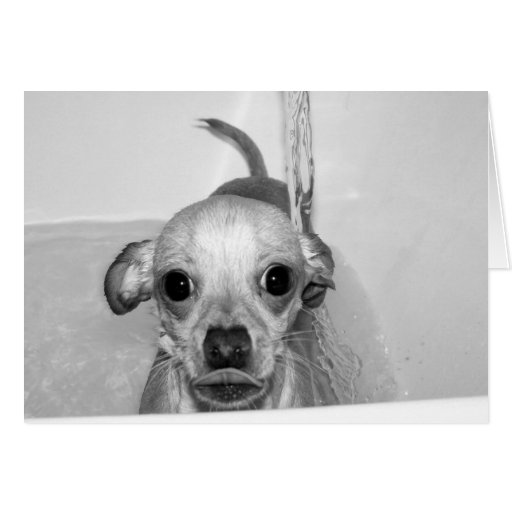 THIS IS WHAT I THINK OF BATHTIME CARDS