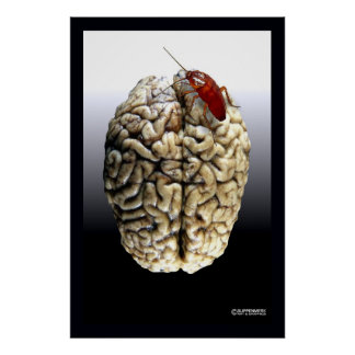 This is your roach on brains poster