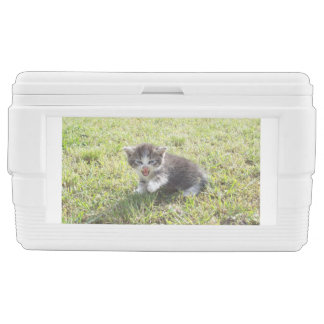 This Kitten fights for Freedom Chest Cooler