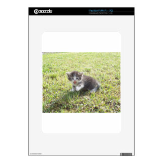 This Kitten fights for Freedom Decal For The iPad