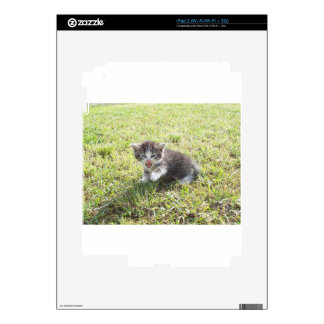 This Kitten fights for Freedom Decals For The iPad 2