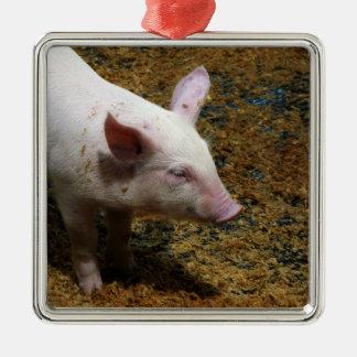 This Little Piggy - Baby Piglet Photo Metal Ornament
