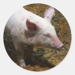 This Little Piggy - Baby Piglet Photo Sticker