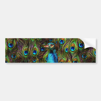 This peacock is watching you! bumper sticker