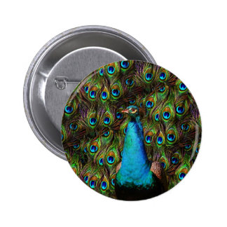 This peacock is watching you! button