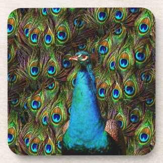 This peacock is watching you! drink coaster