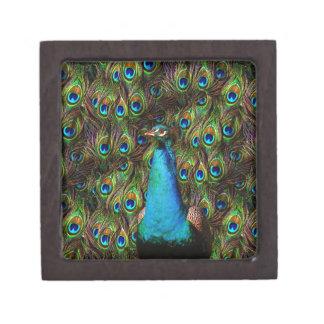 This peacock is watching you! keepsake box