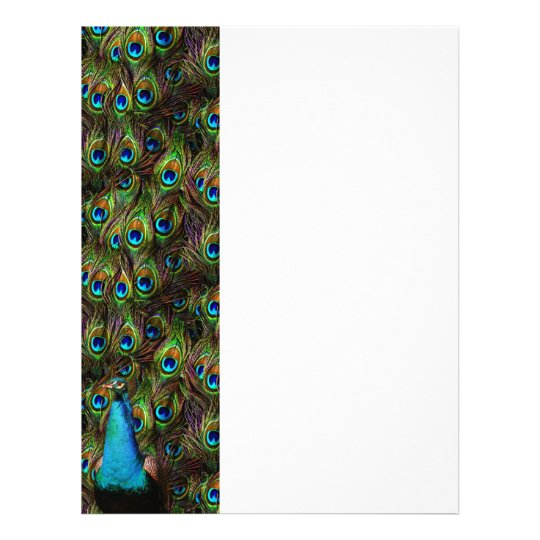 This peacock is watching you! letterhead