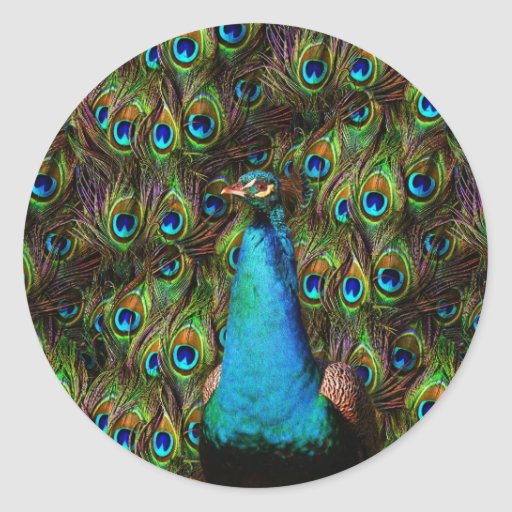 This peacock is watching you! round sticker