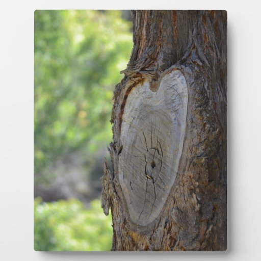 This Tree has a Heart Display Plaques