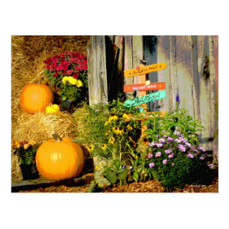 This Way to the Pumpkins Postcard