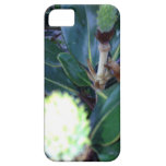 ThisBudsForYou iPhone 5 Protector