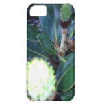 ThisBudsForYou iPhone 5C Cases