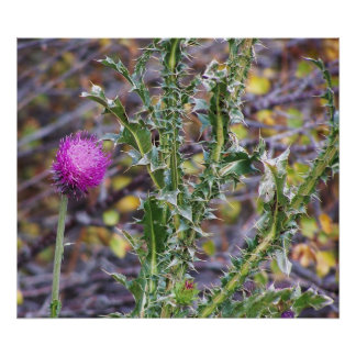 Thistle and Thorns Posters