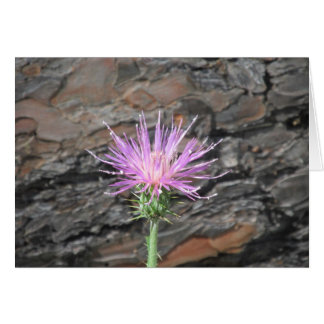 Thistle Bloom in Front of Fallen Tree Greeting Cards