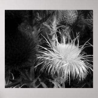 Thistle Bloom, Yosemite National Park Print