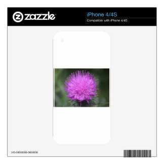Thistle Decal For iPhone 4S