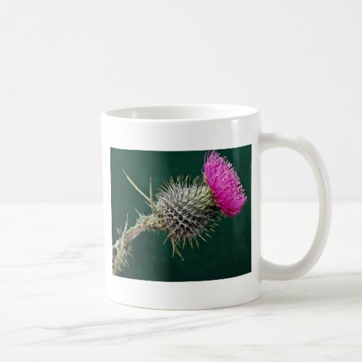 Thistle head  flowers classic white coffee mug