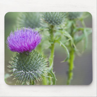 Thistle Mouse Pad