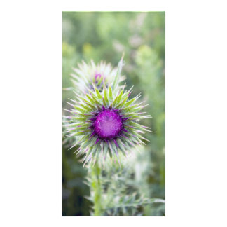 Thistle Photo Cards