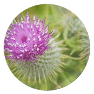 Thistle Party Plate