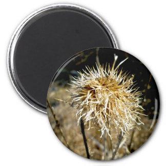 Thistle Seedhead Magnet