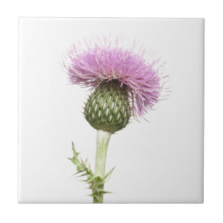 Thistle Small Square Tile