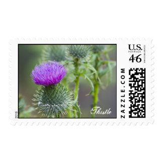 Thistle Stamp