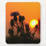 Thistle Sunrise ~ Thistle silhouette in sunrise Mouse Pad